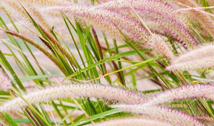 Zauberhafte Gräser